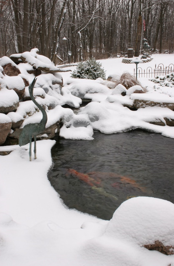 Pond fish care for Koi pond temperature winter