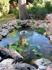 Pond Information - areation in colorado backyard pond
