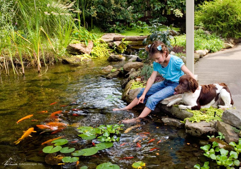Koi Pond Prices