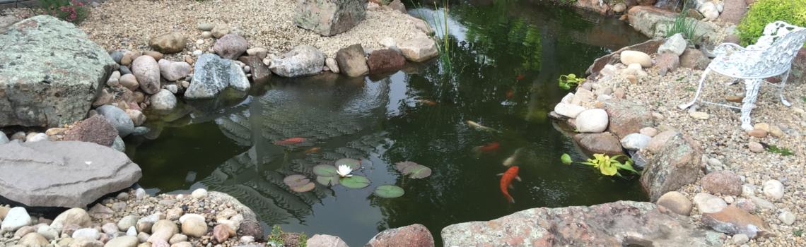 explore the pond