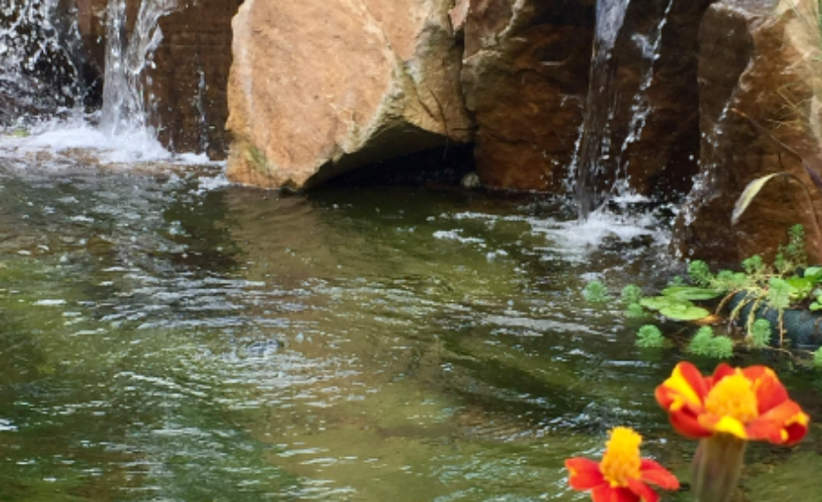 Feinberg Waterfalls & Flowers