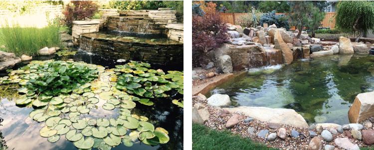 Renovated Pond