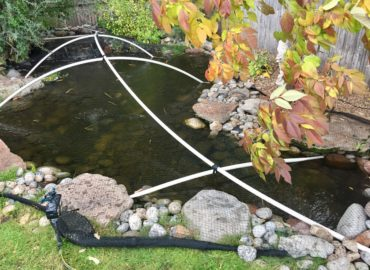 Net your Pond for Fall