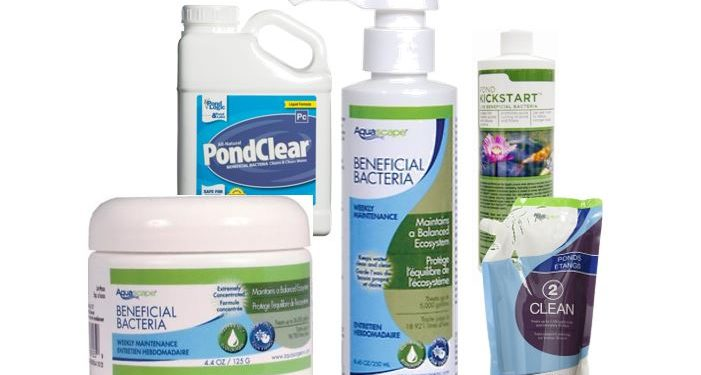 Ponds and beneficial bacteria