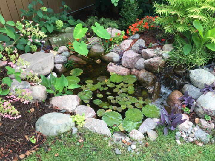 Pond Mainkoi pond backyard water featuretenance
