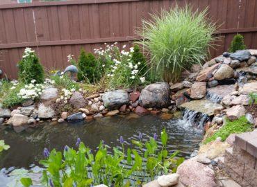 Liner or concrete pond?
