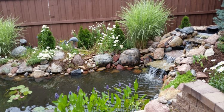 koi pond backyard water feature