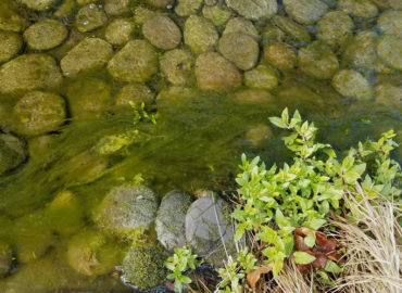 String Algae Creeping Up In Your Pond?