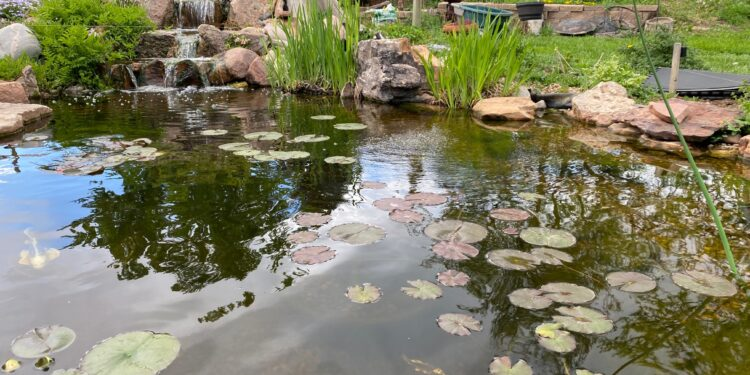 The pond autofill